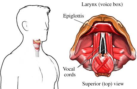 Vocal Anatomy - Happy Voices